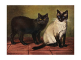 Manx and Siamese Cats