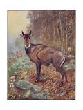 Antelope  Winifred  Nilgha