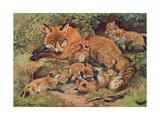 Fox  Vixen and Cubs 1909