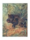 Pig  Wild Boar Indian
