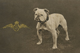 Rfc WW1 Bulldog Postcard