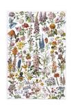 Flowers  Larousse 1913