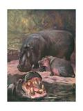 Hippopotami 1909