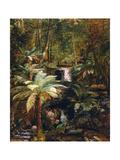 Dense Jungle in New Guinea