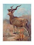 Kudu  Cuthbert Swan
