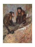 Monkeys  Capuchins  Swan