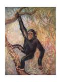 Chimpanzee  Wild Beasts