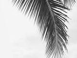Tizate Palm 1