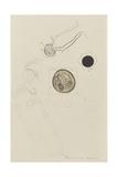 Plumularia Pinnata: Hydroid