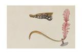 Syngnathus Lumbriciformis: Pipefish