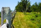 Nantucket Island Weathered Wood Fence Photo Poster