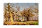 Oak Trees in Sherwood Forest  1877