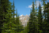 Banff Mountain Peak from Forest Nature Photo Poster
