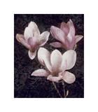 Pink Magnolias II