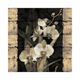 Orchids in Bloom II