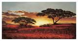 Memories of Serengeti