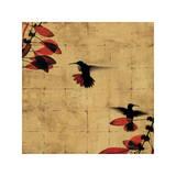 Colibri I