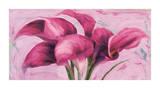 Purple Callas