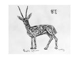 8E Slender-Horned Gazelle  2009
