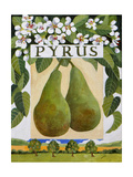 Pyrus (Pear)  2014