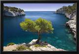 Lone Pine Tree Growing Out of Solid Rock  Calanques Near Cassis  Provence  France
