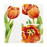 Three Tulip Studies in a Sure  2013
