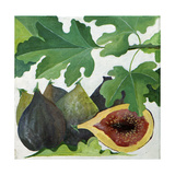 Figs  2013