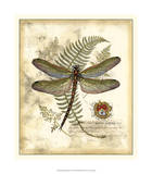 Regal Dragonfly I