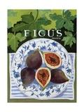 Fieus (Figs)  2014