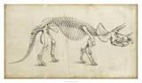 Dinosaur Study II Giclée par Ethan Harper