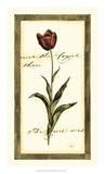 Jen's Tulip I