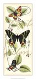 Butterfly Flight II