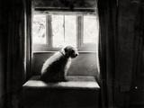 Fozzie Waiting