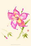 Hibiscus Flower III