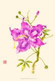 Hibiscus Flower I