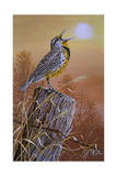 Meadowlark Painting