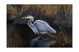 Making Strides - Great Blue Heron