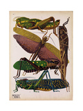 Insects  Plate 16