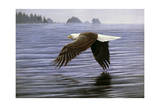 Low Flight Bald Eagle