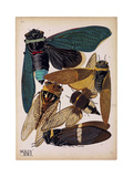Insects  Plate 1