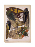 Insects  Plate 11