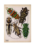 Insects  Plate 14