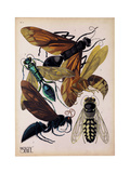 Insects  Plate 15