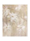 Magnolias II