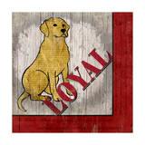 Labrador Retriever II