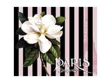 Paris Magnolias IV