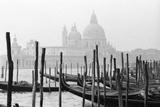 Santa Maria Della Salute  Venezia  Italia