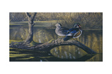 Spring Pair - Wood Ducks