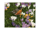 Springtime Robin with Crocus