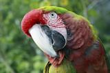 Quizacle Parrot